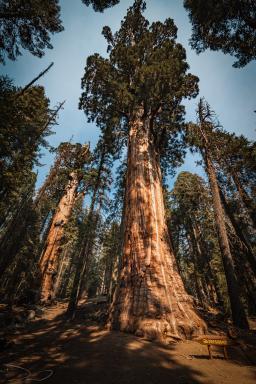 The President & Chief Sequoya